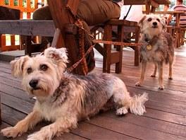 Posezení se psem v restauraci či kavárně? Na zahrádkách to nebývá žádný problém.
