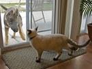Kočka a pes v jedné domácnosti se mohou stresovat navzájem.