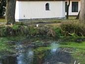 Opilý řidič vozidla Škody Octavia projel rybníkem v obci Jilem na Vysočině.