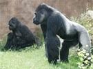Richard patří k největším fešákům v evropských zoologických zahradách.