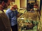 Gorilí miminko je v inkubátoru pod neustálým dohledem chovatelů i veterinárního