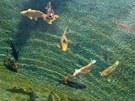 Rybky v biotopu