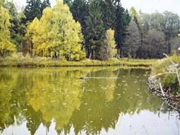 Typický chovný rybník