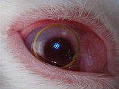 Zobrazovací čočka s rozsvícenou diodou přímo v králičím oku