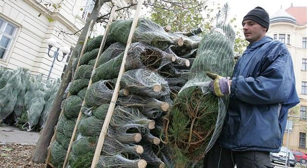 Prodej váno�ních stromk� na Komenského nám�stí v Brn�, prodava� Rostislav