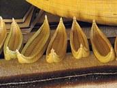 Drobné makety lodí v domě Paulina Estebana.