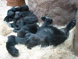 Odpočívající samice s mláďaty