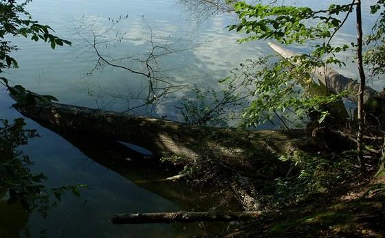 Čerstvě padlé stromy jsou magnetem pro dravce.