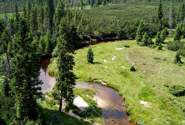 Jizerky, 2004 - 2006 - Rašelinné ekosystémy jsou dalším typem lesa, který patří
