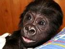 Podle ošetřovatelů má Tano veselou povahu, hodně se směje.
