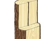 [Na rozříznutém kmeni je vidět struktura dřeva.]