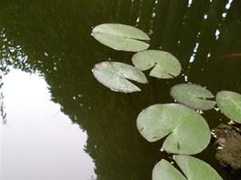 K vodní vegetaci není na škodu nahodit.