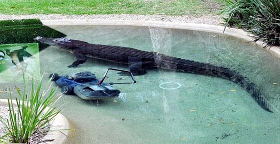 Krokodýl si lehl vedle sekačky a nikoho k ní nepustil.