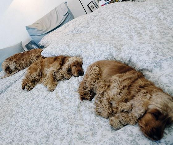 Do ložnice s futony a vyzdobené originálními fotografiemi z cest má psí smečka