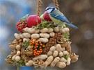 Pestrou náplň krmítka ptáci uvítají.