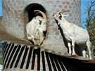Zděná věž má oddělené chlívky pro zvířata, které jsou přístupné z točitého