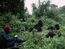 Skupina goril horských v pohoří Virunga ve Rwandě studovaná týmem americké