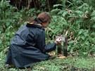 Americká zooložka Dian Fosseyové v oblasti výzkumné stanice goril horských v