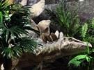 Z expozice libereckého Dinoparku