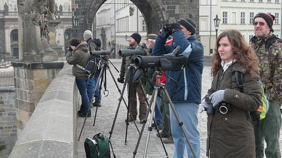 K pozorování se sjíždějí ornitologové z celé republiky.