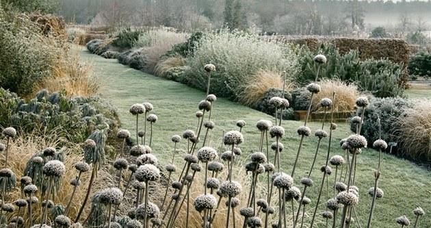 Hluboké mrazy bez sn�hu ohro�ují citliv�j�í rostliny.