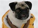 Jakmile klesne teplota pod pět stupňů pod nulou a máte doma krátkosrstého psa,