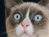 Už od pohledu je jasné, že snowshoe není jen tak nějaká kočka. Modré oči,