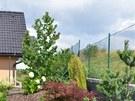 Nově založená rabata (ostrůvky zeleně) u plotu nahoře vyžadují samozřejmě větší...