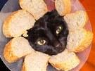 Obkládání kočky chlebem inovativně