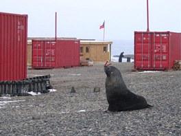 Stavba přilákala řadu místních zvířecích návštěvníků.