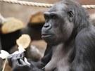 Gorily se o získání dobrot musí zasloužit, což skvěle vyplní jejich volný čas.