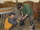 Podkovář Libor Štencl, bývalý profesionální žokej, se stará o výměnu podkov huculským koním na Toulcově dvoře v pražské Hostivaři jednou za 6 týdnů až 2 měsíce.
