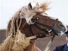 Přehlídka plemenných koní v píseckém hřebčinci.