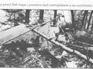 Trosky letadla DC-9 po nehod� u Srbsk� Kamenice v roce 1972. Zbytky trupu a