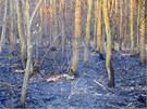 U Grygova na Olomoucku hořelo zhruba osm hektarů lesního porostu a suché trávy,