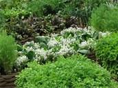 Kuchyňskou zahradu plnou bylinek a čerstvé zeleniny, které jsou kdykoliv po