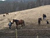 Na statku v Malčanech mají koně k dispozici volný výběh i rozsáhlé pastviny.