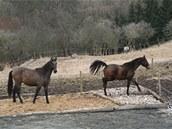 Na statku v Malčanech se koně volně pohybují a jejich kopyta přicházejí do kontaktu s různými druhy povrchů, takže se přirozeně obrušují.