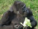 Chelewa jí salát.
