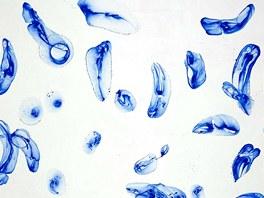 Ji�� Georg Dokooupil: Bubbles Blue on White (2008) - Akryl a m�dlov� bubliny na