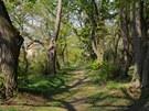 Alej mezi vyhlídkovým pavilonem a loretou v zámeckém parku