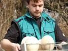Pštrosí vejce jsou proti slepičím obří.