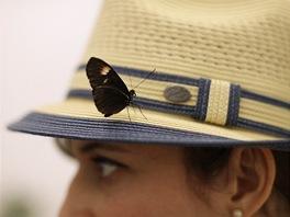 Na tiskovou konferenci k výstavě Daminea Hirsta se přiletěl podívat i motýl.