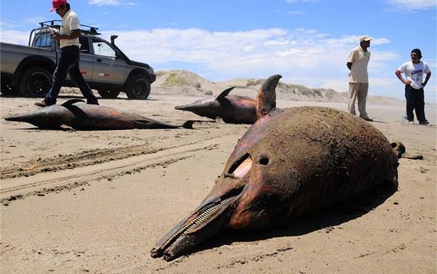 Mrtví delfíni na plá�i San José nedaleko m�sta Chiclayo v Peru (6. dubna 2012)