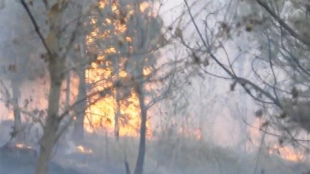 Se změnil v obří ohniště hoří pařezy i vzrostlé stromy