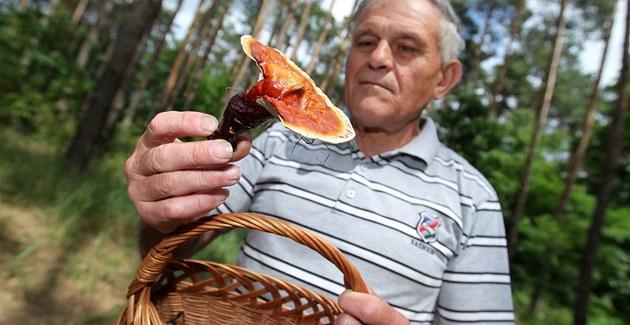 V lesích na Hodonínsku mohou houba�i najít i vzácnou lesklokorku lesklou, láká