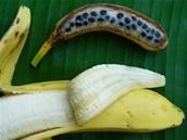 Každý, kdo vyrazil poprvé do tropů, je překvapený bohatostí odrůd banánovníku. Na snímku je sladký cavendish, tedy typ, který v posledních desetiletích ovládl západní trh a pro srovnání jeho divoký předek.  Cavendish je bez semínek a množí se pouze řízkováním. Všechny dnes pěstované rostliny jsou tedy v podstatě kopie rostliny objevené v 50. letech 20. století v botanické zahradě v Saigonu.
