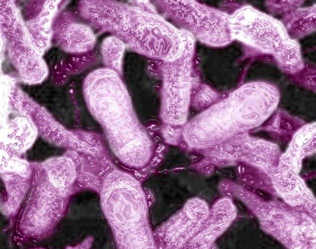 Bakterie klostridií