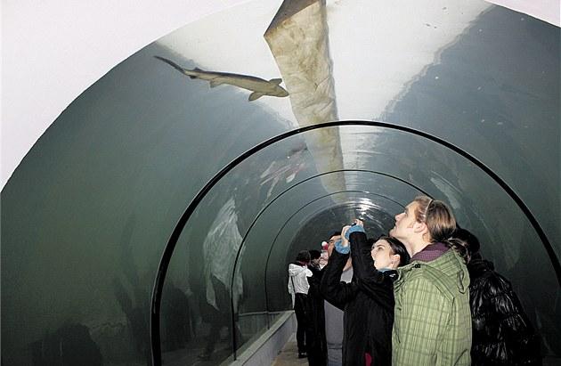 Unikátní expozice �ivá voda nabízí pohled do sv�ta sladkovodních ryb v �ekách a