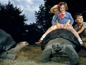 Děti a želvy galapážské v londýnské zoo